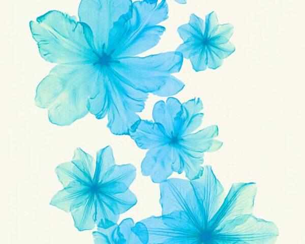 behang-bloeme-blauw-342725